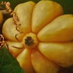 Garcinia Cambogia1