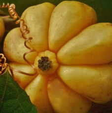 Garcinia Cambogia Fat Burning